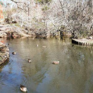 Blackheath Duck Pond